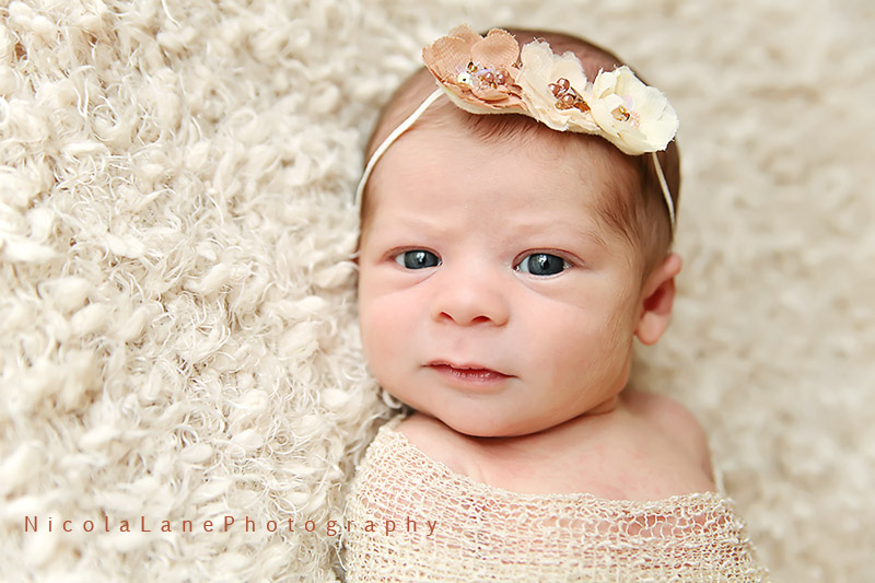 cary newborn photographer